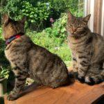 4匹の猫がいる暮らし