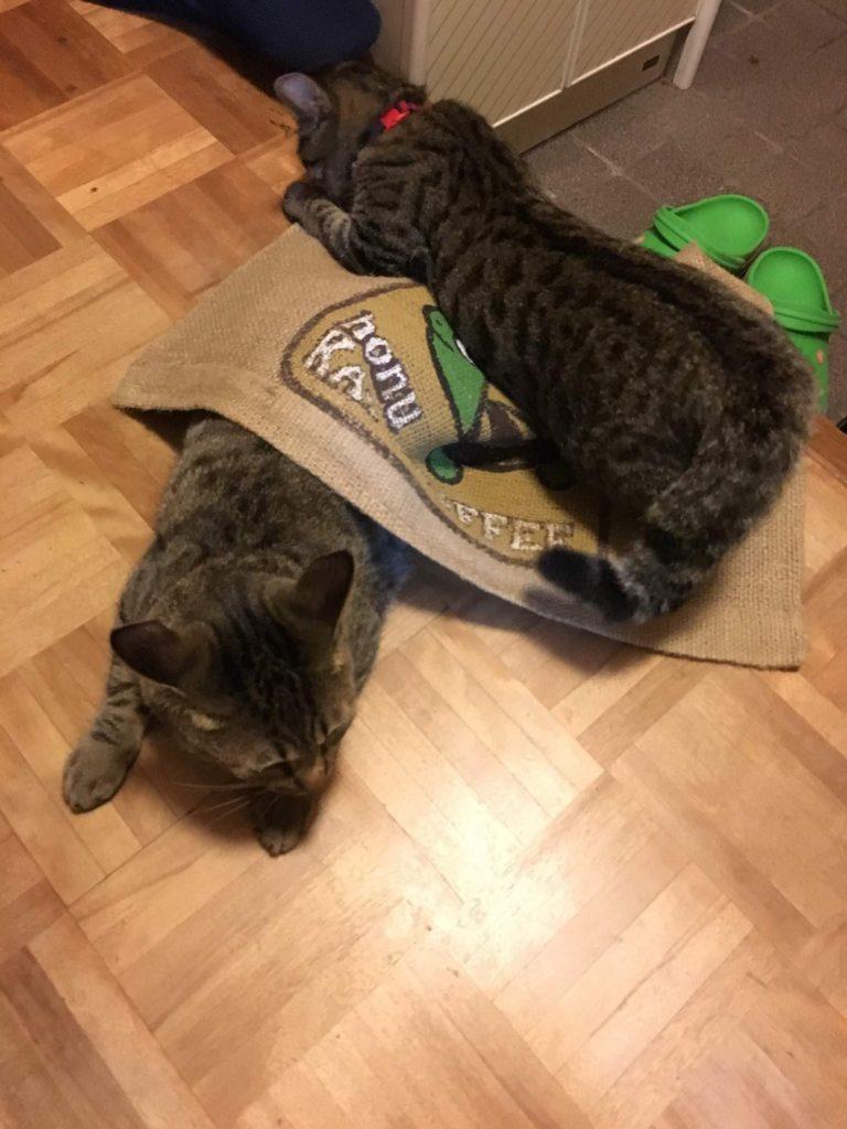 玄関マットにじゃれる猫たち