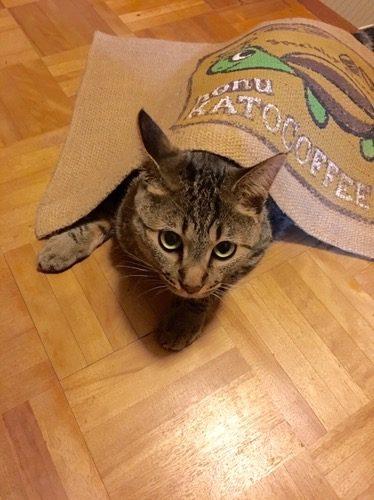 玄関マットで遊ぶ猫