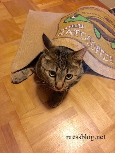 玄関マットに隠れる猫