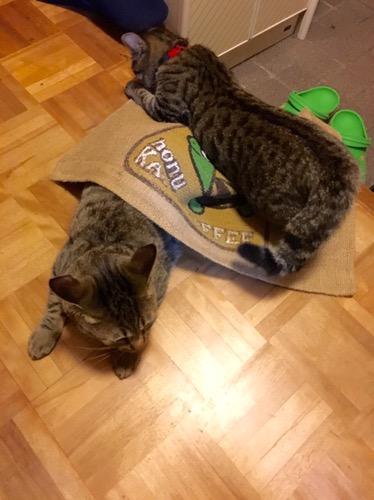 マットに潜って遊ぶ猫たち