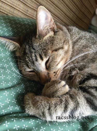 猫の好きなこと|おもちゃ・遊び方【記事まとめ】