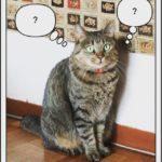 猫がドアやふすまを開けないようにする簡単な対策