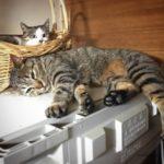 猫が冷蔵庫の上で寝るので困っています 対策に配置換えしてみた