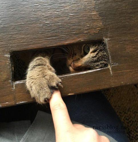 隙間からじゃれつく猫