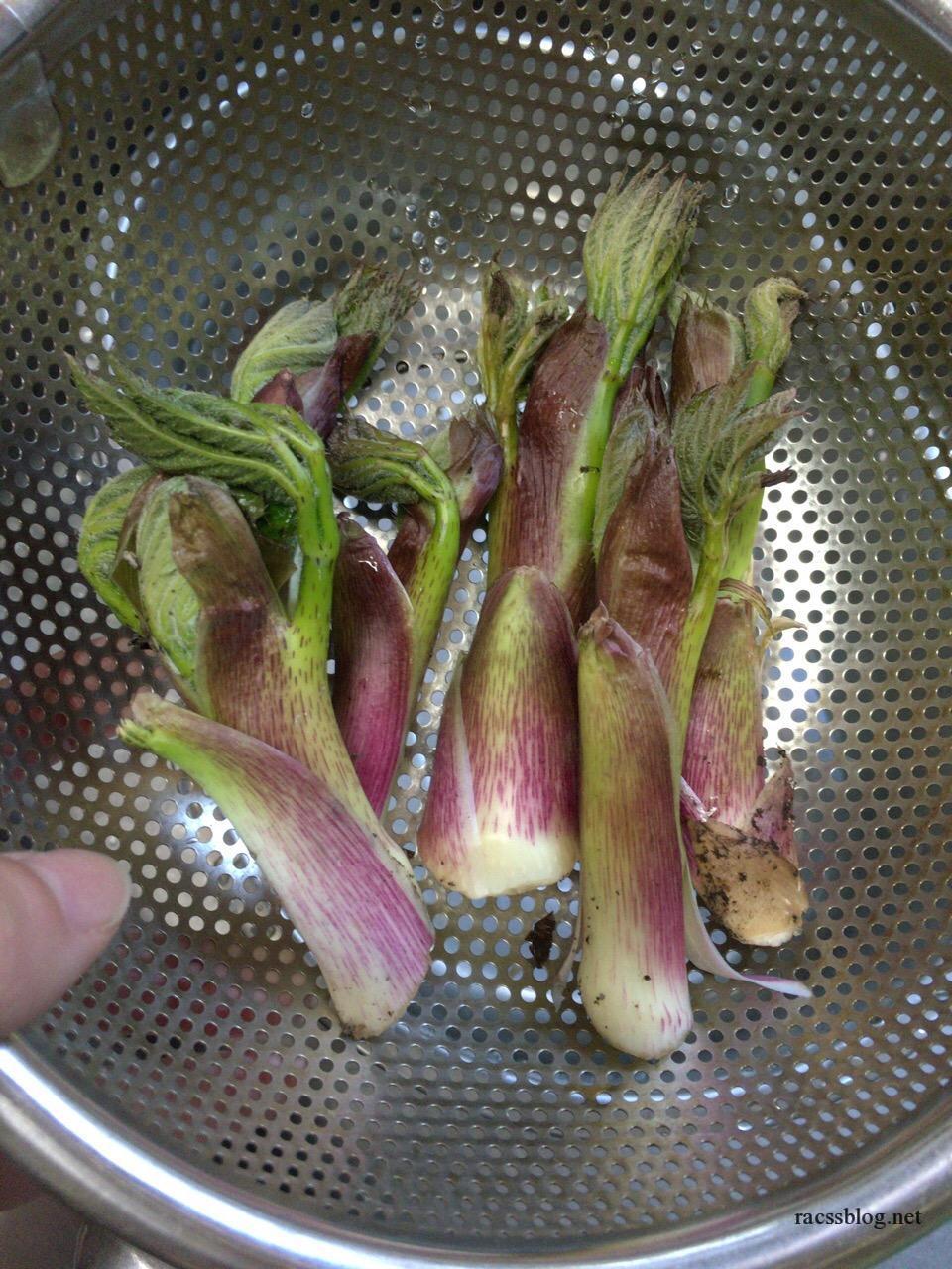 ウドと行者ニンニク収穫 4/24(お庭の山菜)