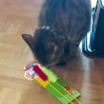 猫が喜ぶ手作りおもちゃの4パターン:我が家の場合