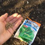 今年も春からほうれん草を栽培します|北海道の家庭菜園 5/17~6/5の様子
