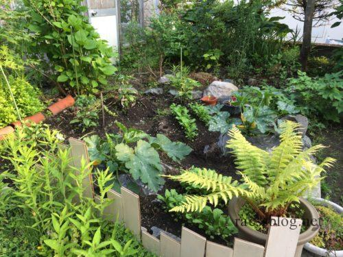 2017中庭の野菜