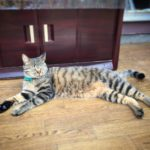 ネコも熱中症になります|7月の猫画像と熱中症対策