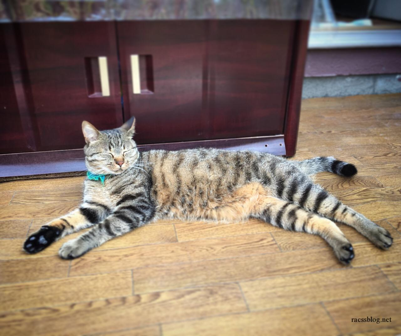 7月の猫たち 猫の熱中症対策とは