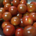 プチトマト大量消費レシピ|デザートになるはちみつ漬け他5レシピ