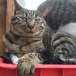 8月の猫たち 猫のしっぽ踏んじゃった事件