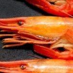 ホッカイシマエビはやみつきになる!北海道でも貴重な高級海老の食べ方