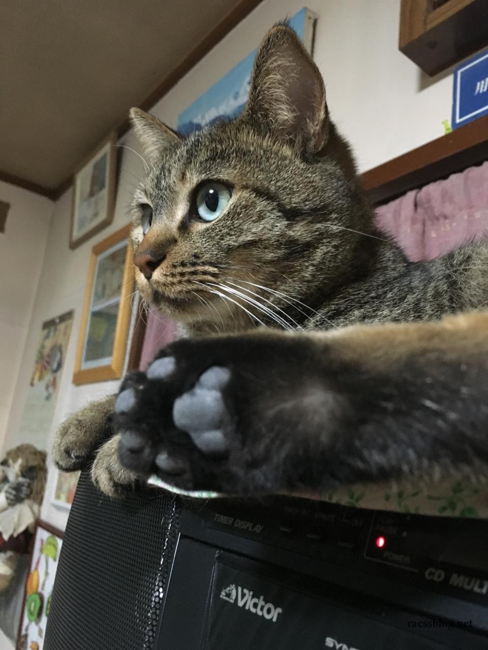 うちの猫はラジオの上が好き。