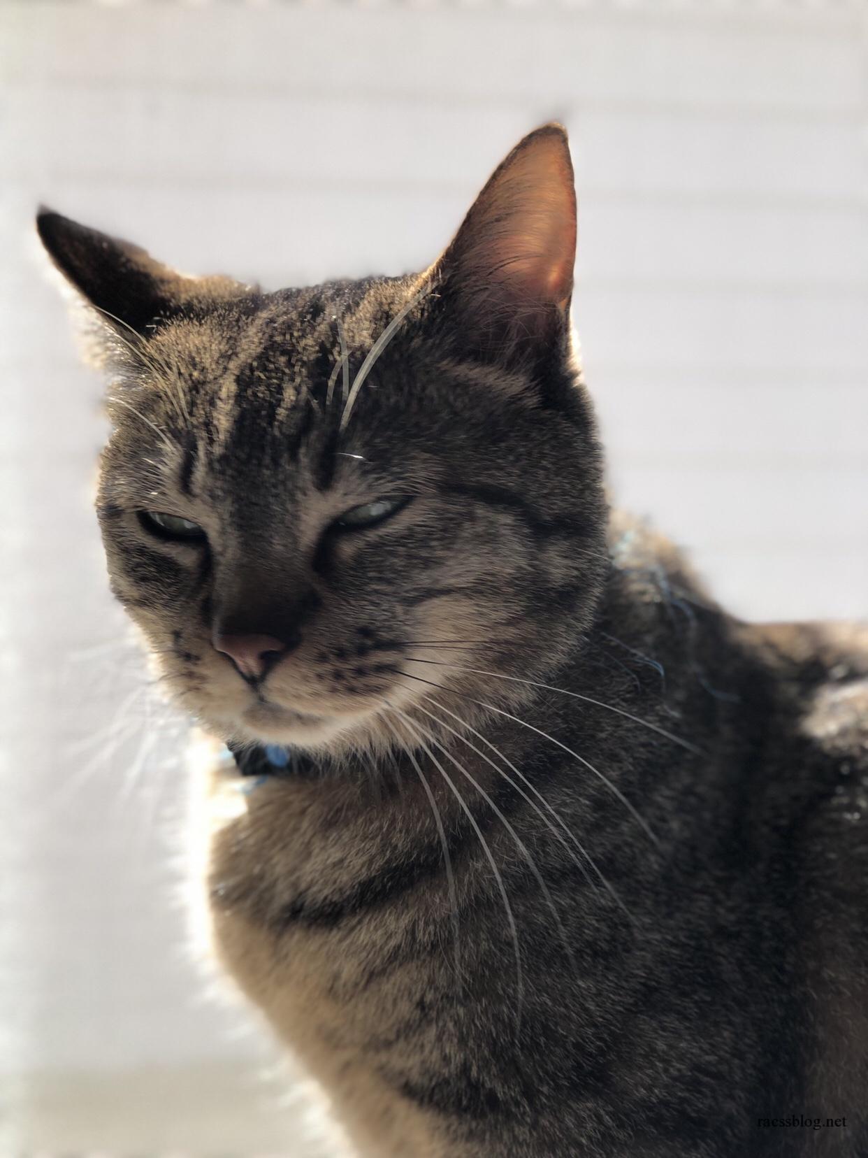iPhone8Plusカメラのポートレート機能で猫を撮影したのでレビュー