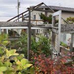 11月の家庭菜園|ピーマンとほうれん草最終収穫・温室解体