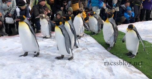 ペンギンパレード旭山動物園