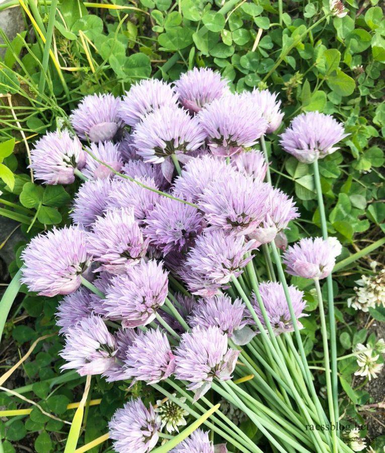 チャイブの花束