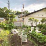 春まきのほうれん草とカブ・プチトマト支柱立て|6月の家庭菜園