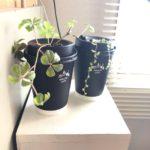 ローソンマチカフェ容器のアップサイクル方法|水栽培ほか