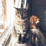 【猫写真】ぎゅっと目をつむるキジトラのムク|猫のまばたきの意味とは