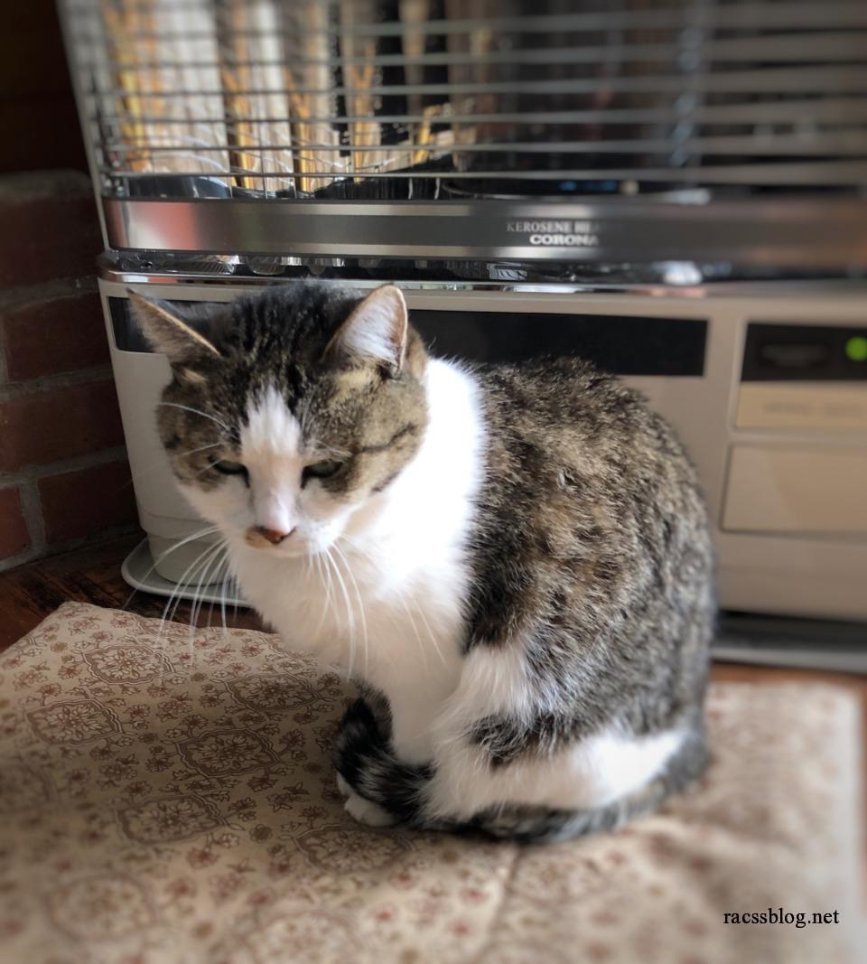 ストーブをつけてほしい猫