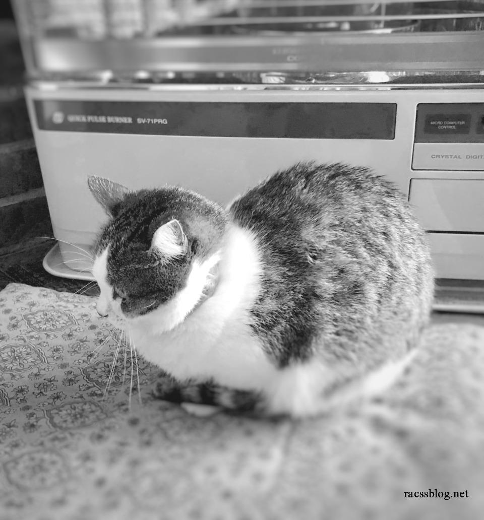 【猫写真】ストーブ前占拠のキジ白のマミちゃん|ストーブが好きな猫