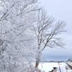 【霧氷の風景】北海道なら平地でも霧氷が見られる条件が揃う!