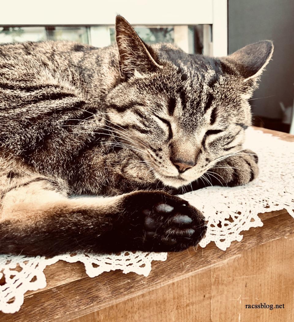 レースの敷物の上で眠る猫