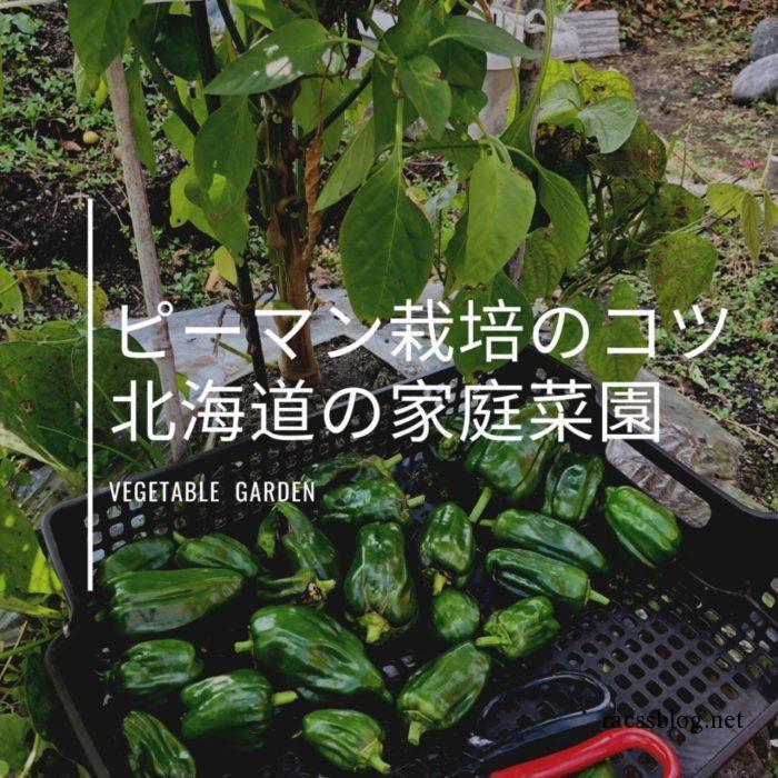 北海道のピーマンの育て方 栽培のコツは6月に植えること