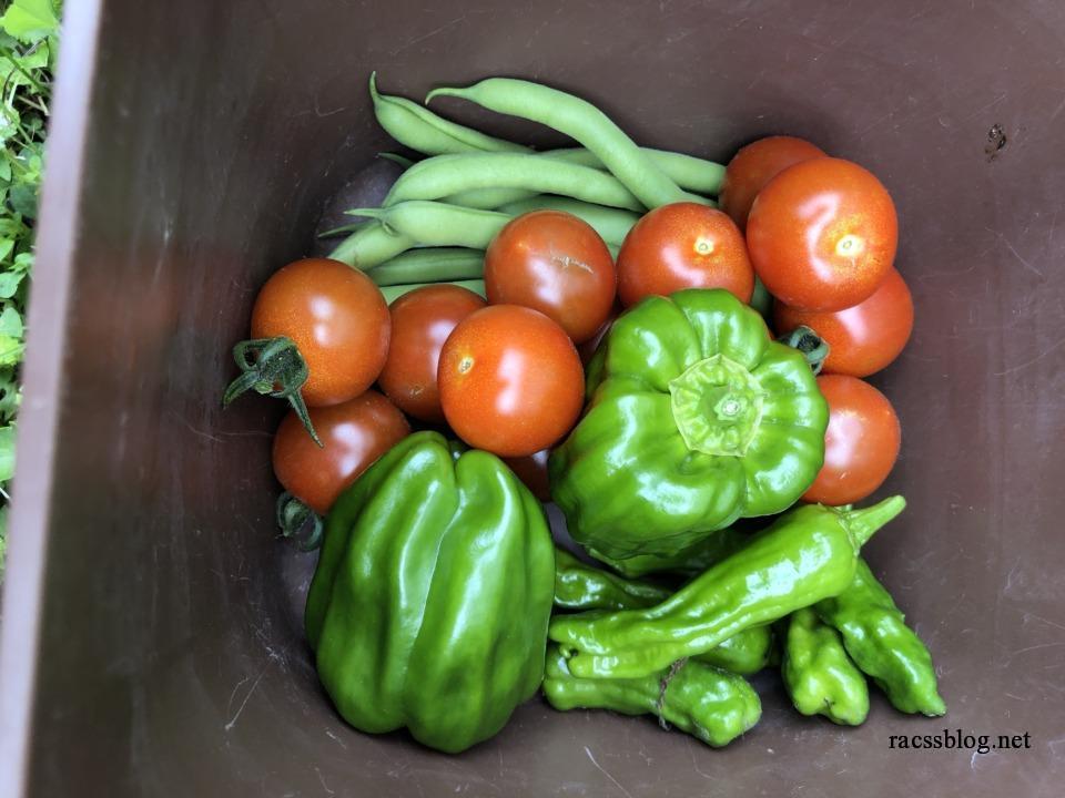 インゲンとピーマンとトマト