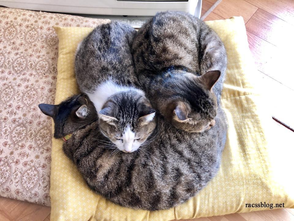 上から見た猫団子