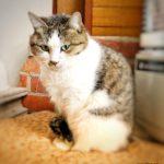 猫トイレ用砂の選び方|木製チップ愛用者が素材別に猫砂の使いやすさを比較します