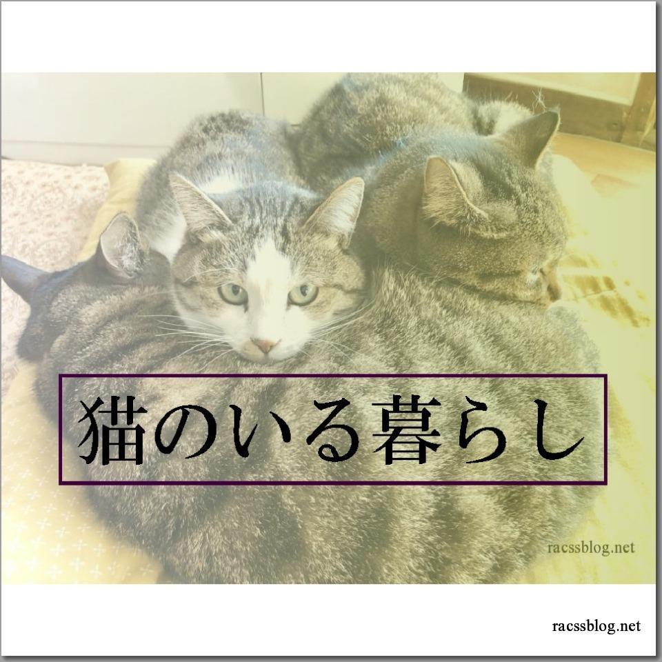 猫について書いた記事