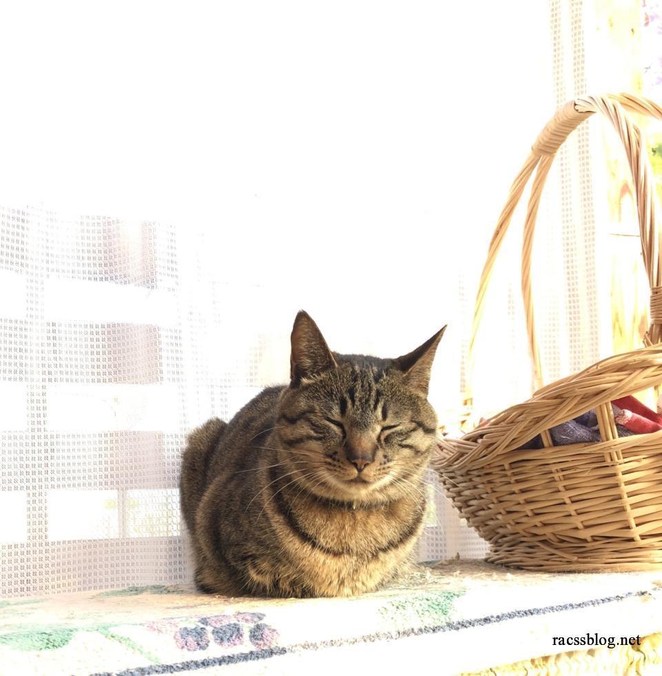 パイル地マットの上の猫