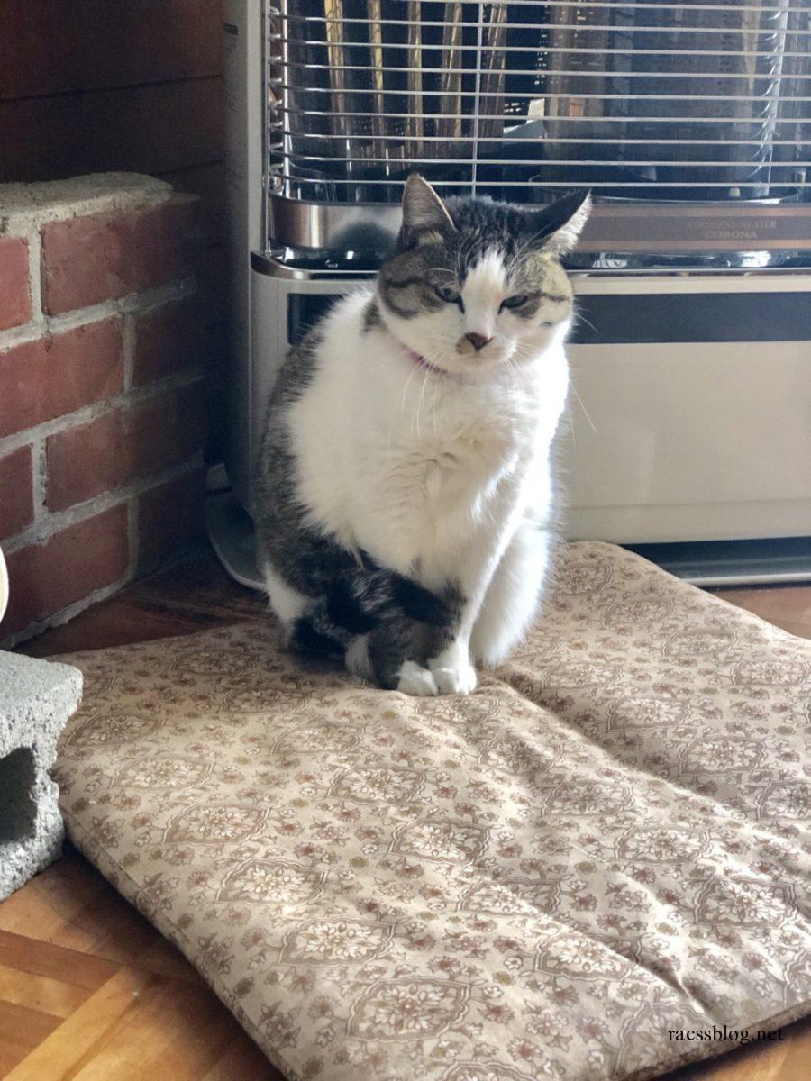 座布団の端に座る猫