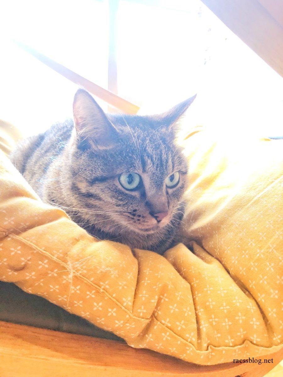 座布団の上の猫