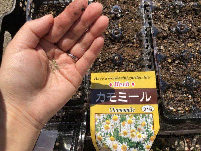 カモミールの苗づくり