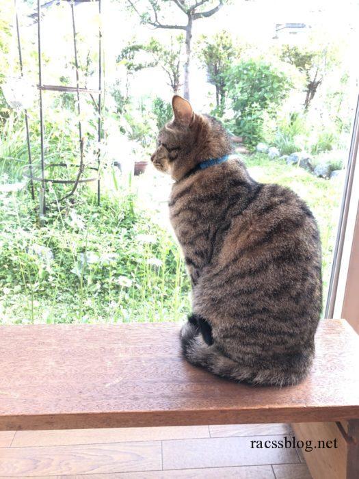 庭を眺める猫
