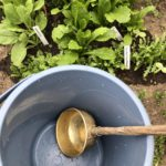 家庭菜園の水やりの節水ポイント|雨水と台所排水の使い方