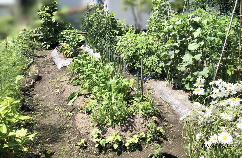 7月の菜園