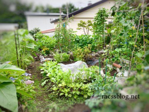 北海道の家庭菜園
