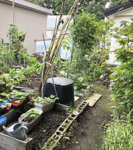 家庭菜園の様子