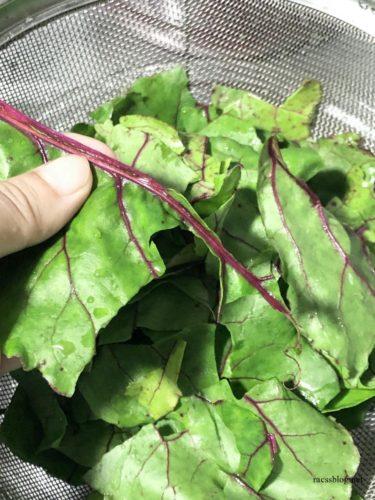 レッドビートの葉