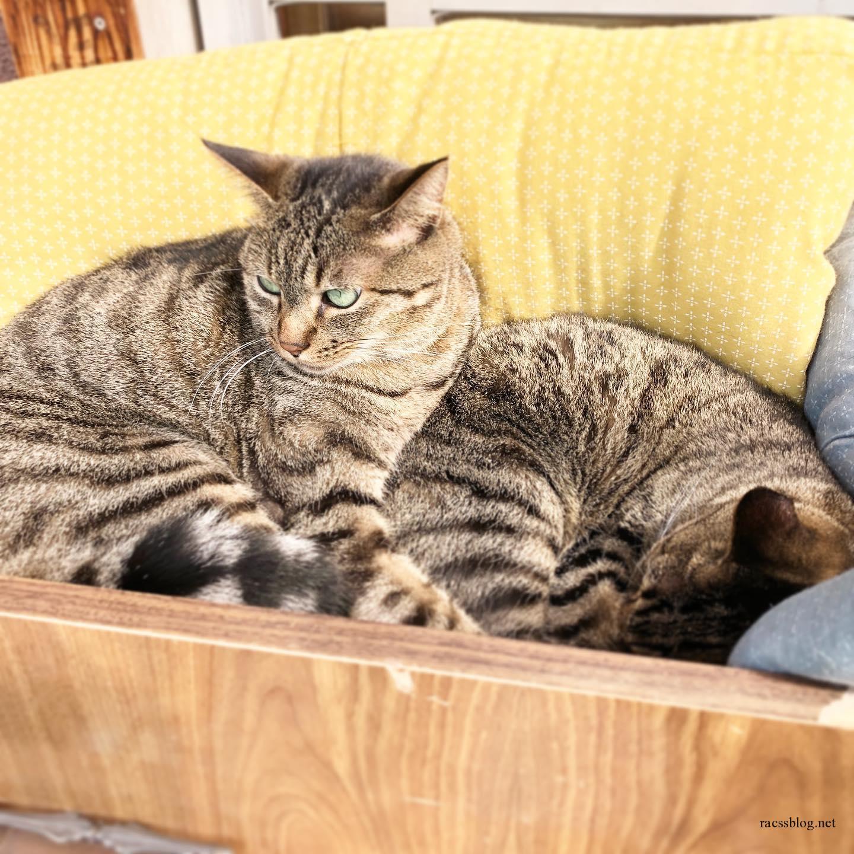 猫とクッション