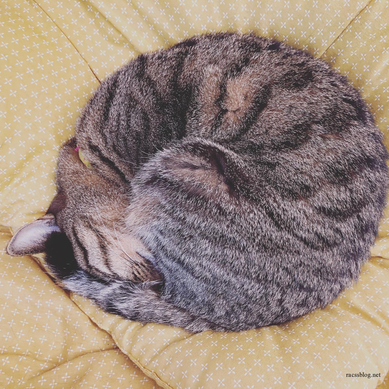 アルマジロみたいにまんまる!このアルマジロがほどけていく様子をご覧ください。#モコ #寒い時はアルマジロに #陽が出てきたので猫に戻りました#きじとら #猫のお昼寝 #catlife (racssの 猫instagramより)