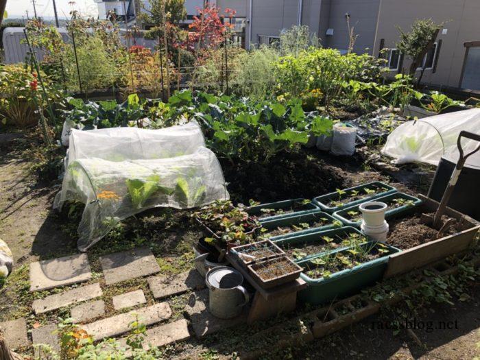 10月の家庭菜園