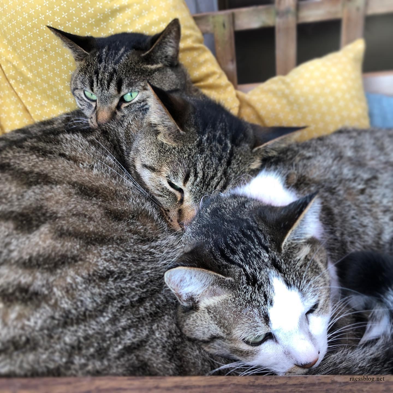 親子猫ベッドにおじゃま。#キジトラ (racssの 猫instagramより)