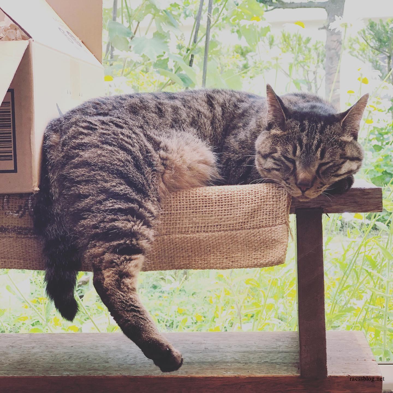 今日の猫(racssの 猫instagramより)